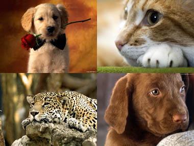 """Скачать обои \ 32 изображений """"Животные"""" бесплатно"""