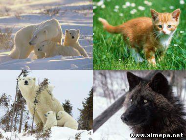 Скачать обои животные бесплатно